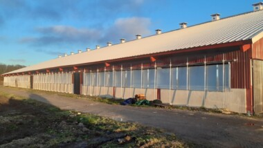 Växande lantbruk på Gotland väljer limträ