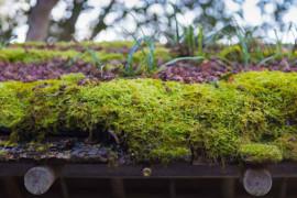 Ny kunskap om fukt och brand för gröna klimatskal