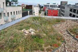 Färre översvämningar med grön infrastruktur