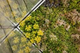 Urbangreen bygger gröna tak åt Vasakronan