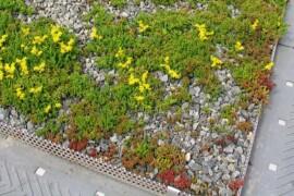 Urbangreen får miljonuppdrag – bygger gröna tak på campus Albano
