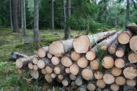OrganoWood satsar på plockhuggen träråvara