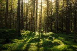 Allt fler företag använder miljöargument i marknadsföring
