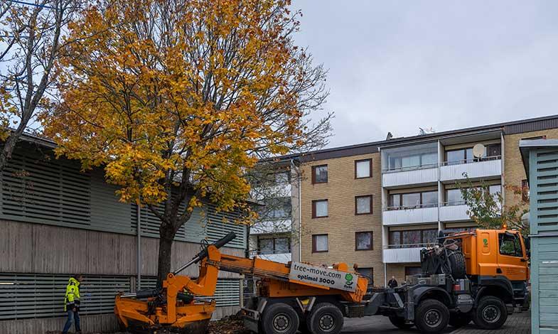 Stockholmshem återvinner träd i Rinkeby